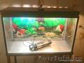 продам аквариум на стойке 120 литров