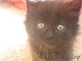 Чёрненькая кошечка малышка 3 недели ищет заботливых хозяев ,
