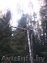 Обрезка деревьев (формовочная, санитарная, утилитарная).  - Изображение #2, Объявление #1053419
