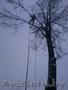 Обрезка деревьев (формовочная,  санитарная,  утилитарная).