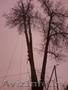 Обрезка деревьев (формовочная, санитарная, утилитарная).  - Изображение #3, Объявление #1053419
