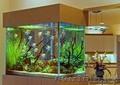 куплю аквариум недорого