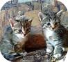 За-мур-чательные котята в дар! - Изображение #3, Объявление #1309874
