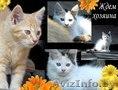 Котята в ответственные руки!, Объявление #1461968